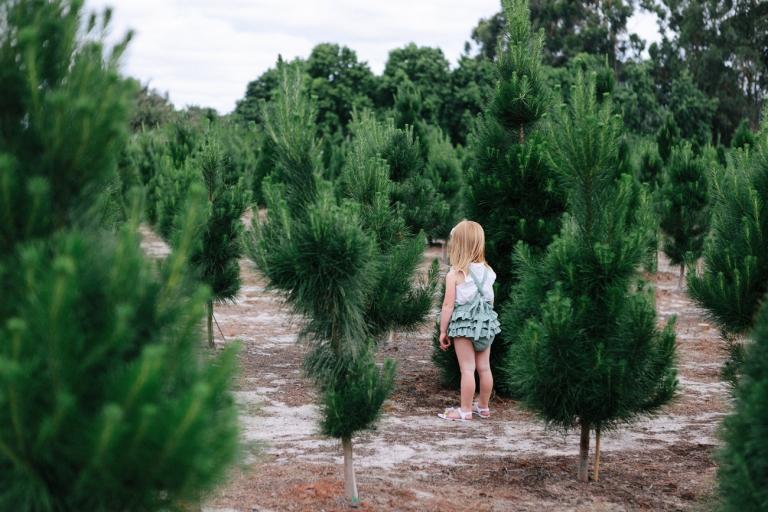 Perth Christmas Photography